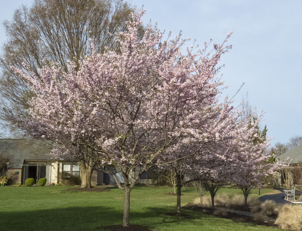 PNWD springtime
