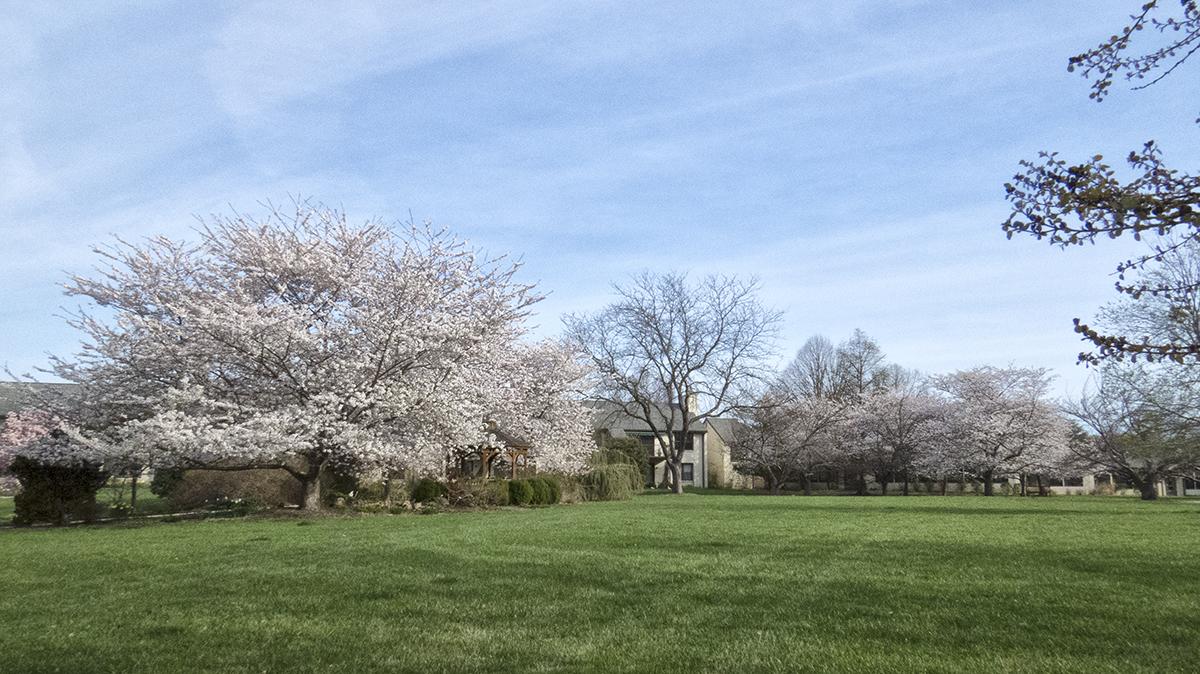 SpringtimePNWD2