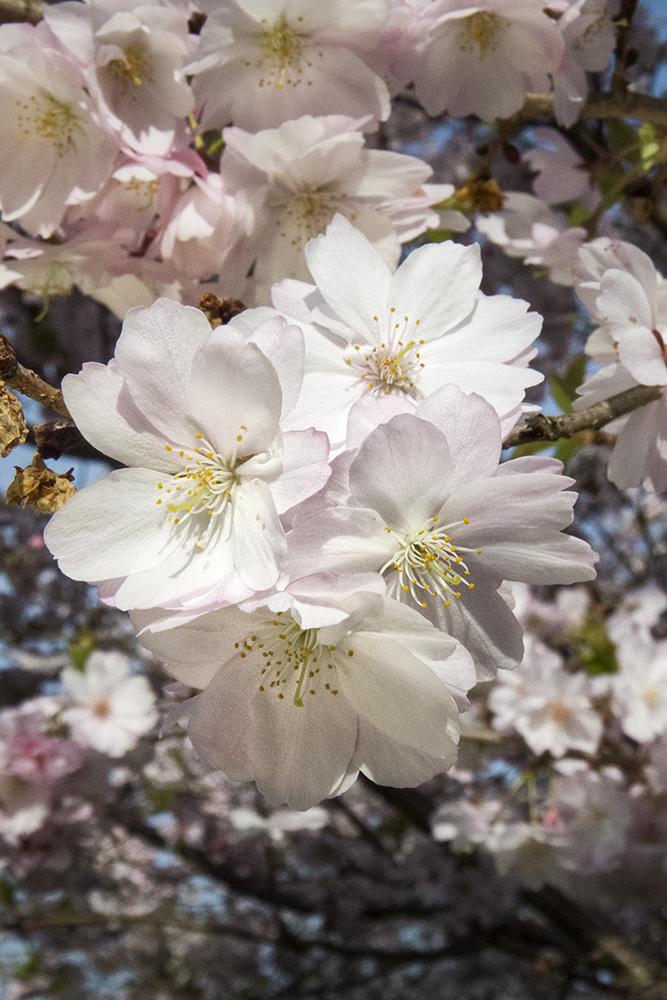 SpringtimePNWD5