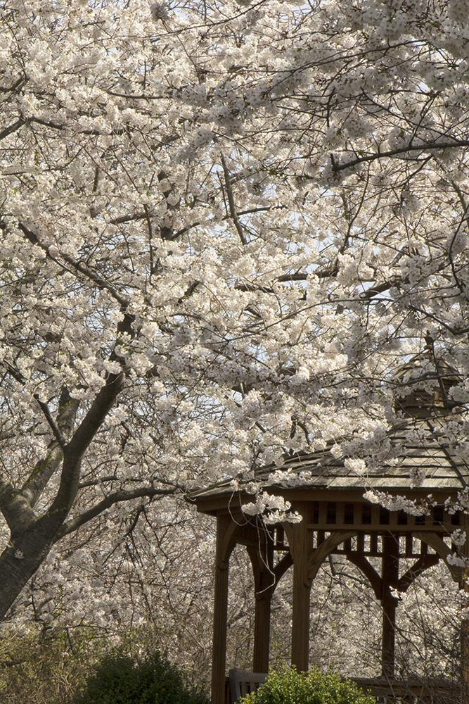 springtime PNWD 2