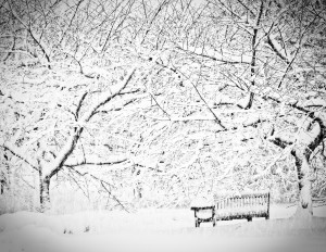 Feb 10 snow ii